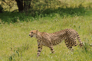 tanzania safaris packages